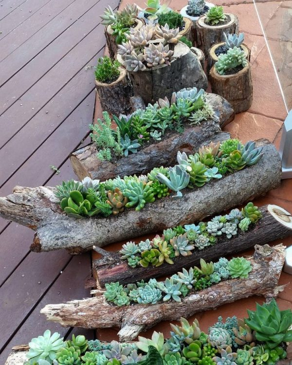 deco with succulents11