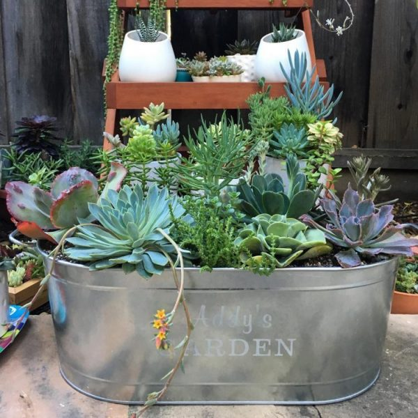 deco with succulents12