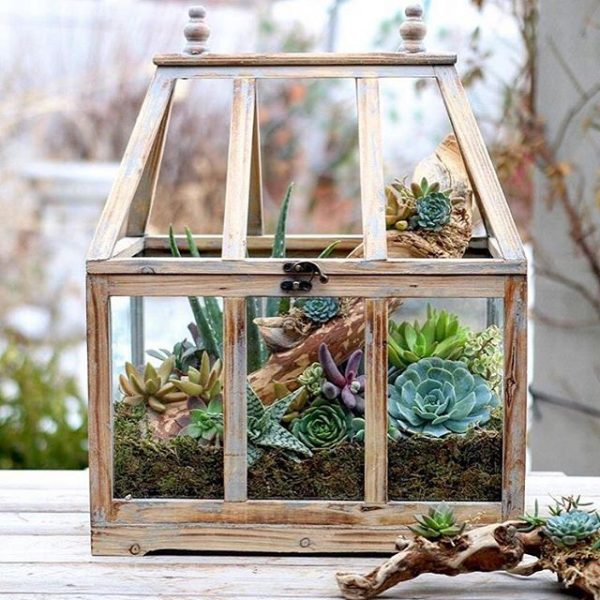 deco with succulents2