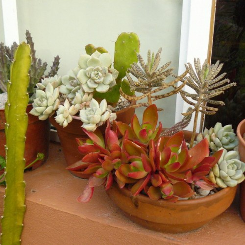 deco with succulents20