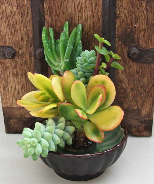deco with succulents21