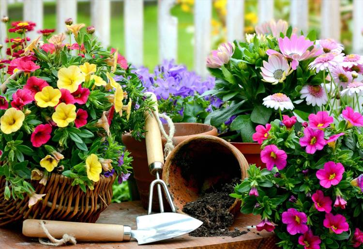 DIY Ideas to Create a Floral Paradise10