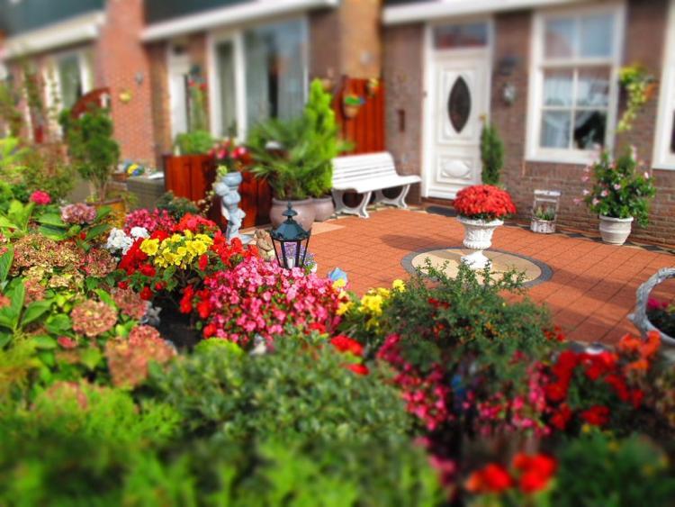 DIY Ideas to Create a Floral Paradise4