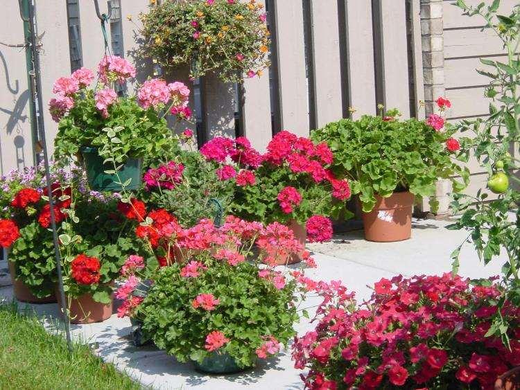 DIY Ideas to Create a Floral Paradise6