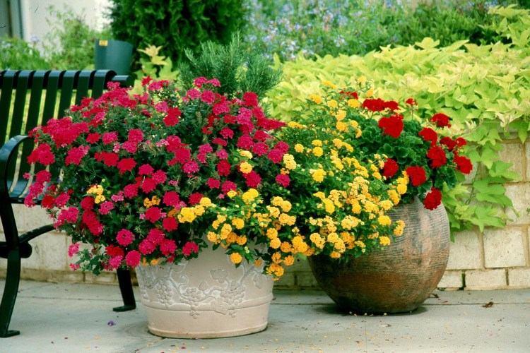 DIY Ideas to Create a Floral Paradise8