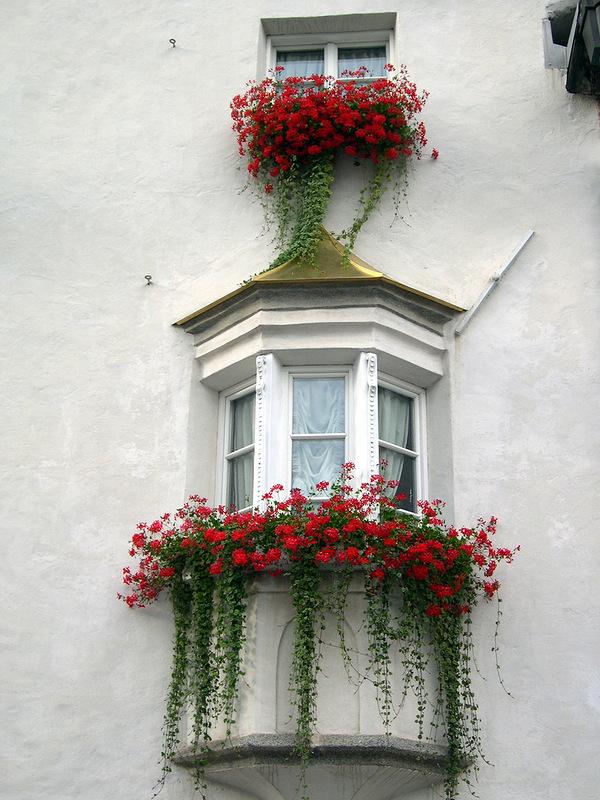 Flower balconies and windows15