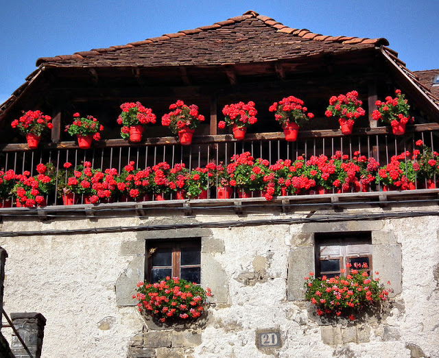 Flower balconies and windows16