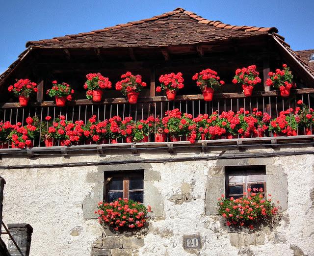 Flower balconies and windows16