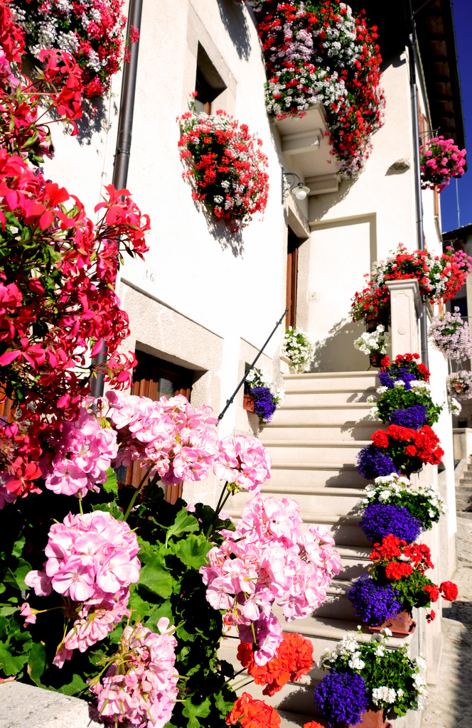 Flower balconies and windows19