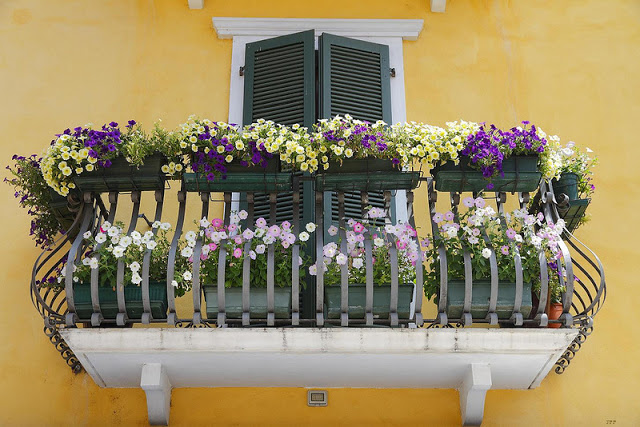 Flower balconies and windows20