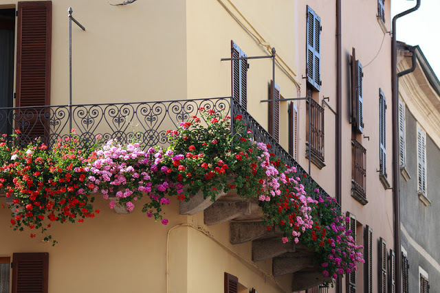 Flower balconies and windows21