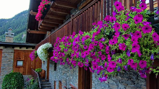 Flower balconies and windows22