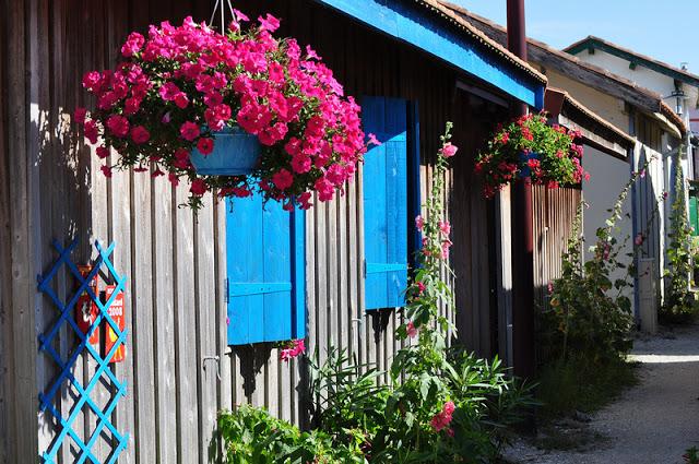 Flower balconies and windows23