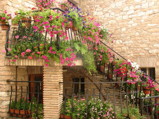 Flower balconies and windows24
