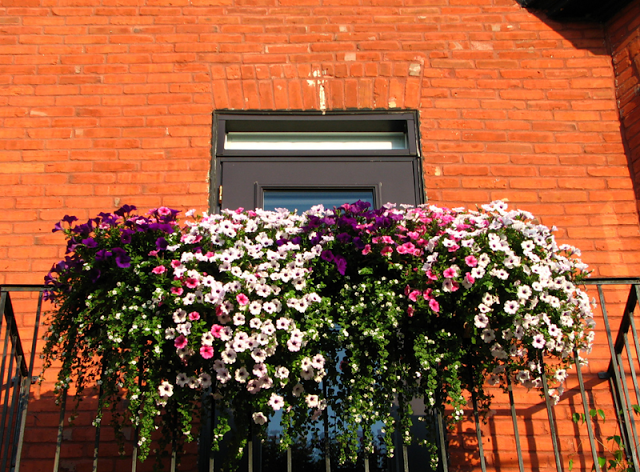 Flower balconies and windows25