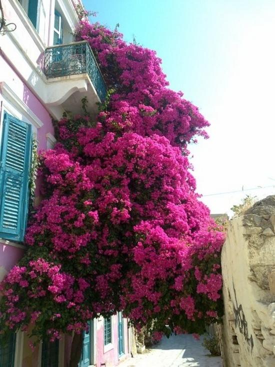 Flower balconies and windows26