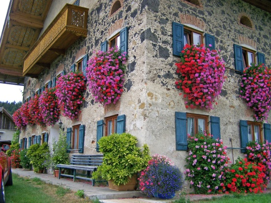 Flower balconies and windows27
