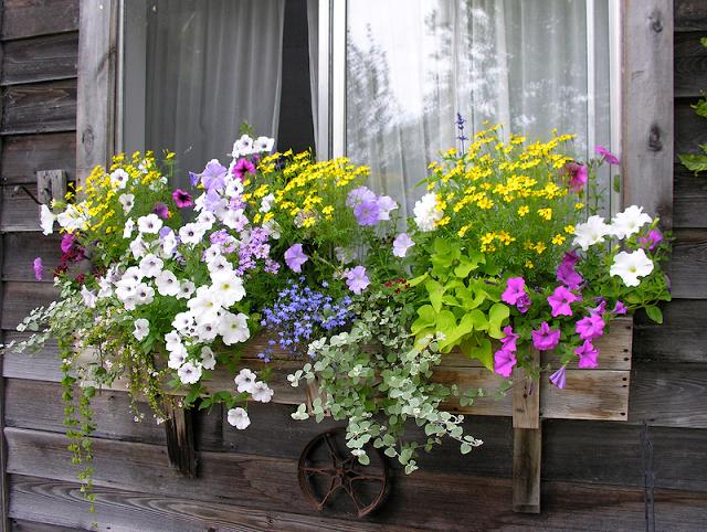 Flower balconies and windows28