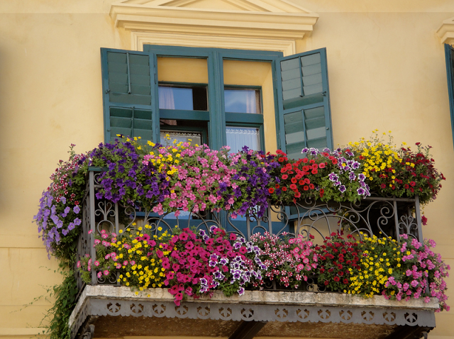 Flower balconies and windows29