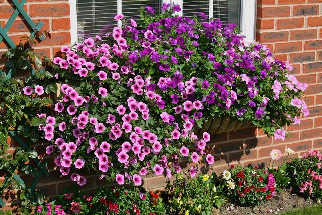 Flower balconies and windows30