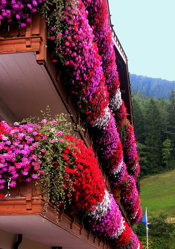 Flower balconies and windows33