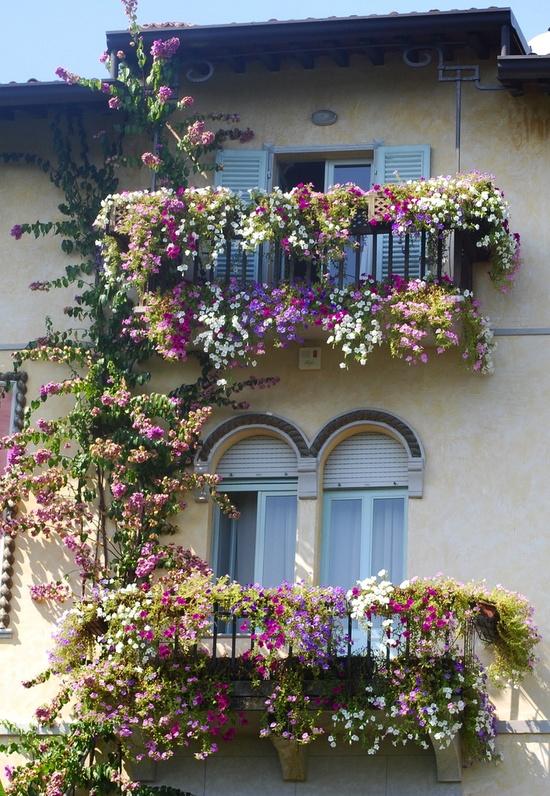 Flower balconies and windows5