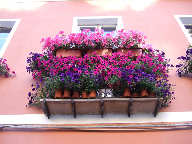 Flower balconies and windows7