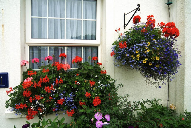 Flower balconies and windows8