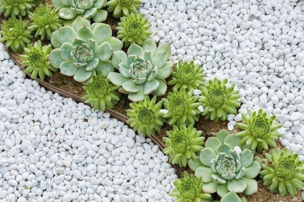 flower beds ideas (15)