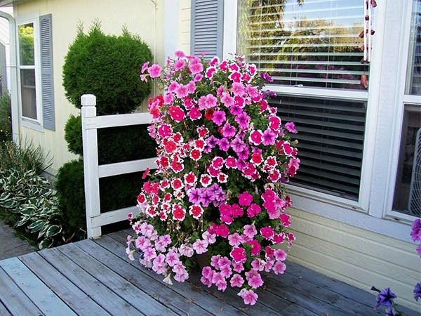 flower beds ideas (20)