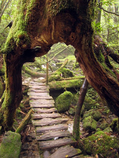 garden paths with wood21