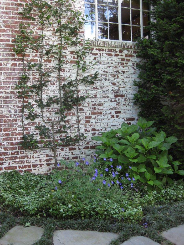 trellis in the garden15