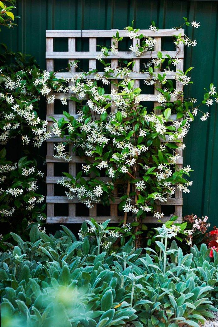 trellis in the garden5