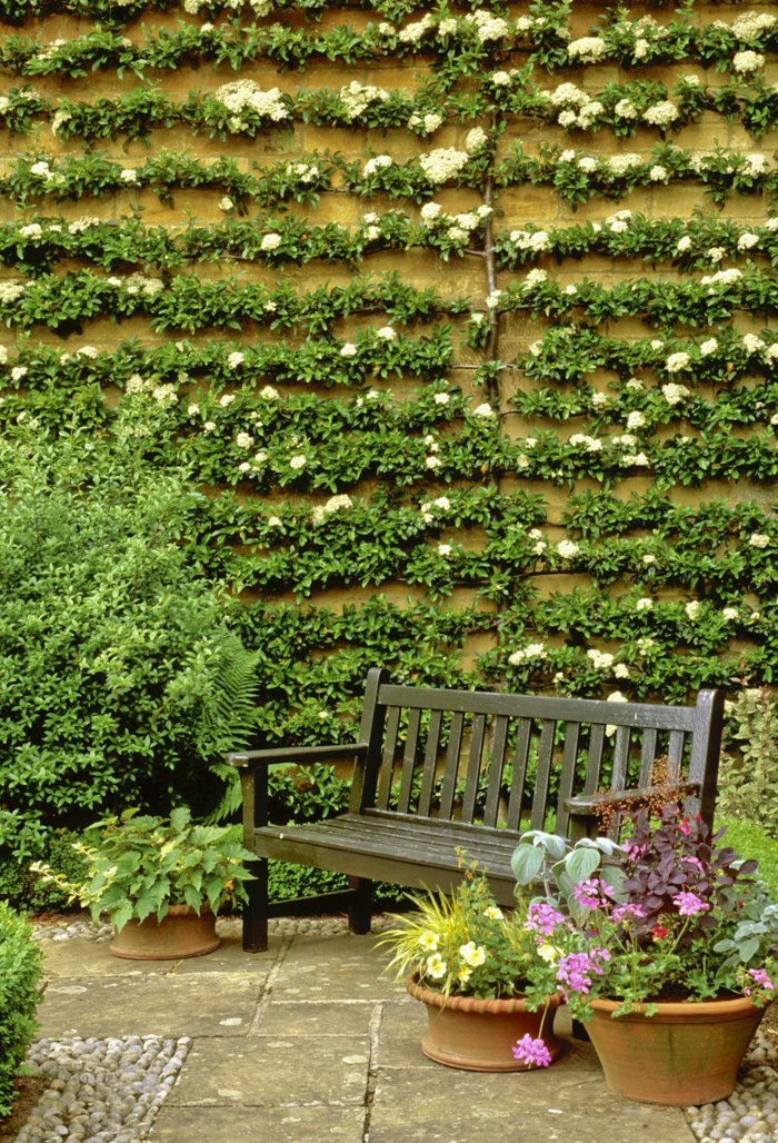trellis in the garden9