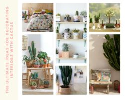 The ultimate ideas for decorating interiors with cactus