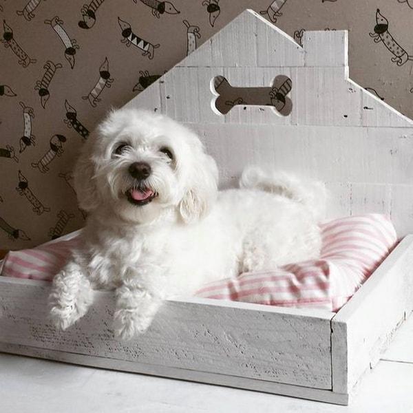 pet beds ideas6