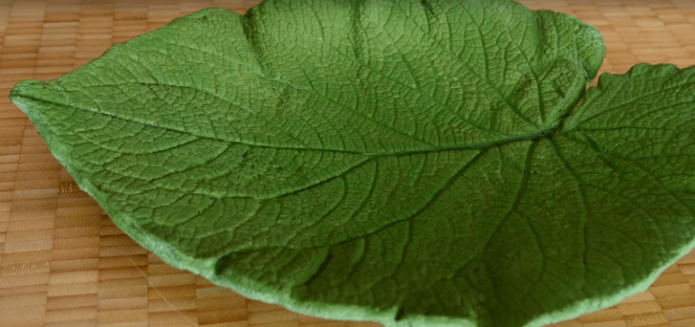Diy Decorative Leaf8