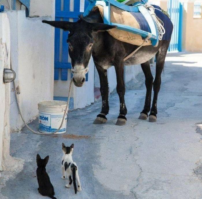 Nostalgic life in the Greek village23