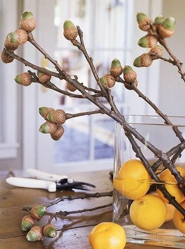diy from acorns12