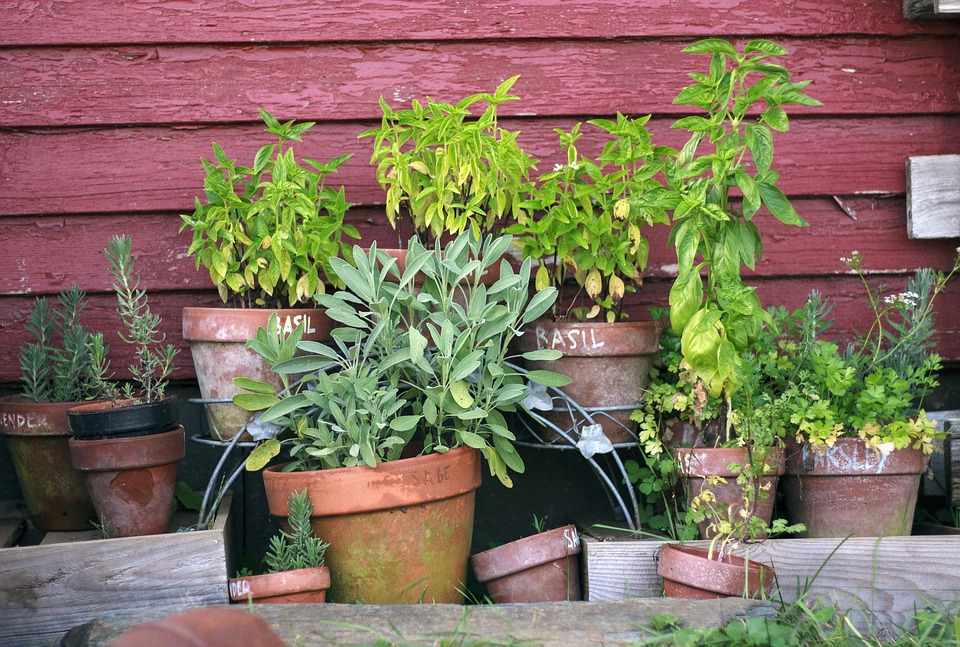 Herbs of spring for balcony1