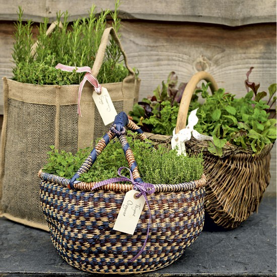 Herbs of spring for balcony10