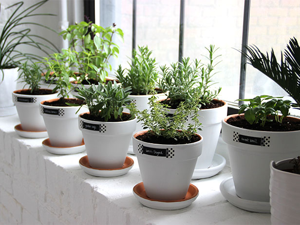 Herbs of spring for balcony11