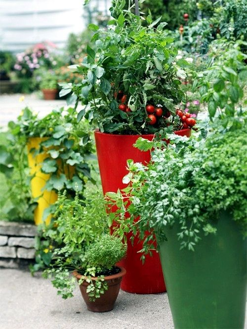 Herbs of spring for balcony14