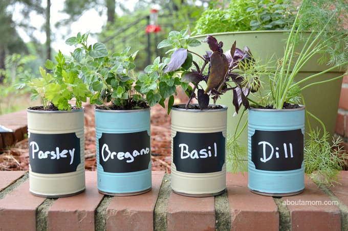 Herbs of spring for balcony8