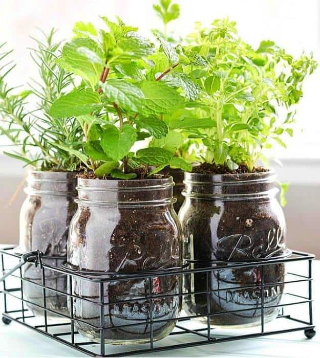 Herbs of spring for balcony9