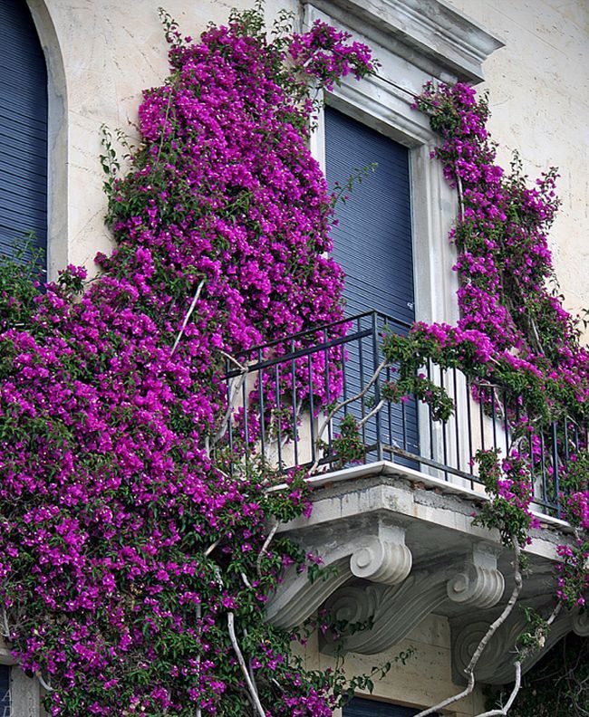 mydesiredhome - blooming balconies ideas50
