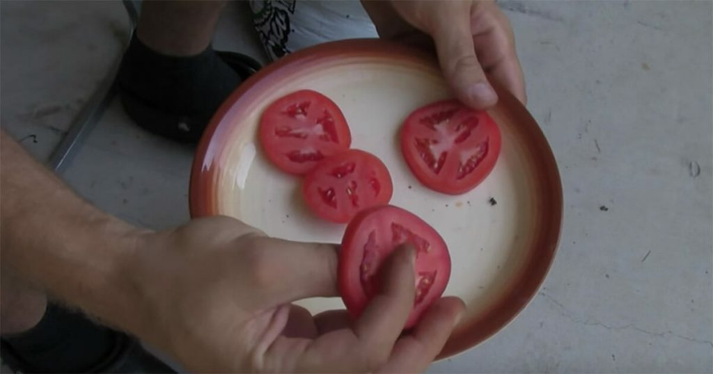 cultivate your own tomatoes in a planter3