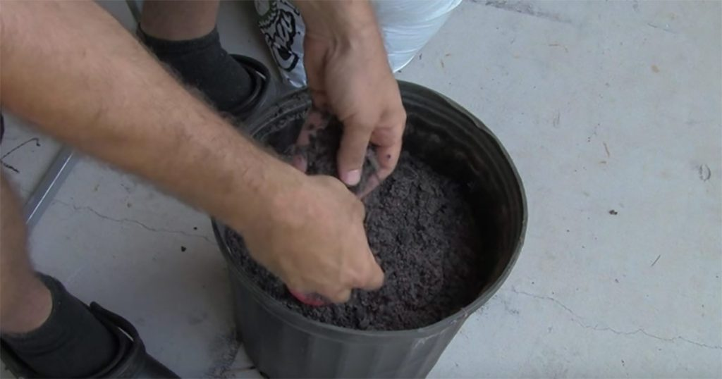 cultivate your own tomatoes in a planter5
