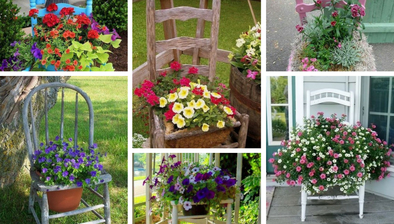 Garden decoration with old chairs and colorful flowers