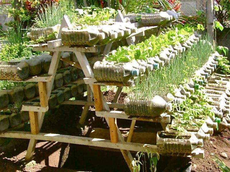 gardening tips and design ideas13